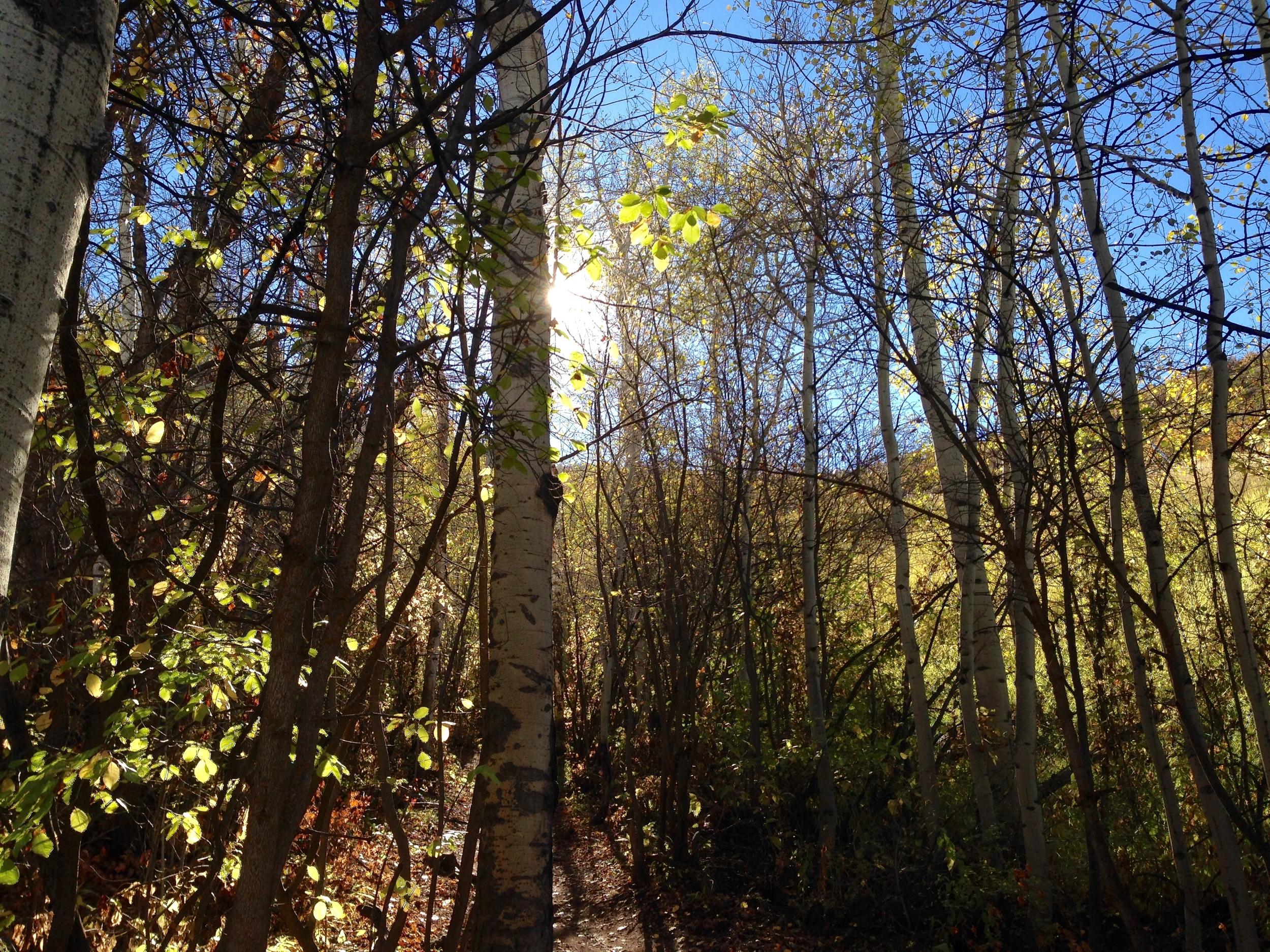 Light peeking through the trees.
