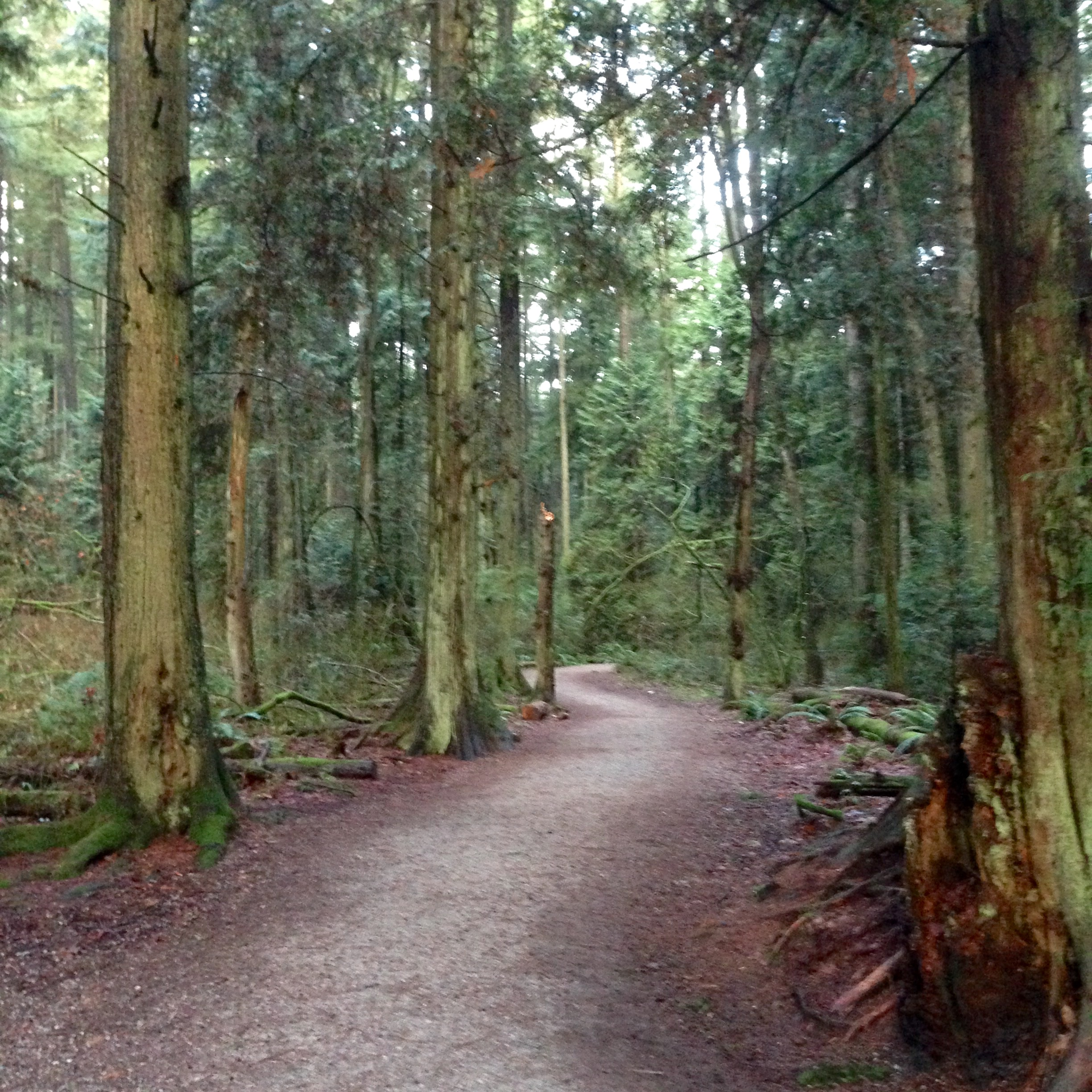 Running in the Endowment Land in Vancouver.