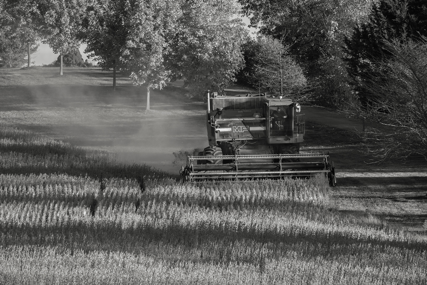 A single combine moves down hill towards my camera position. Fuji X-T2 and a Fujinon XF55-200mm at 70mm. Image exposed at ISO 200 at f5.6 for 1/60 of a second.