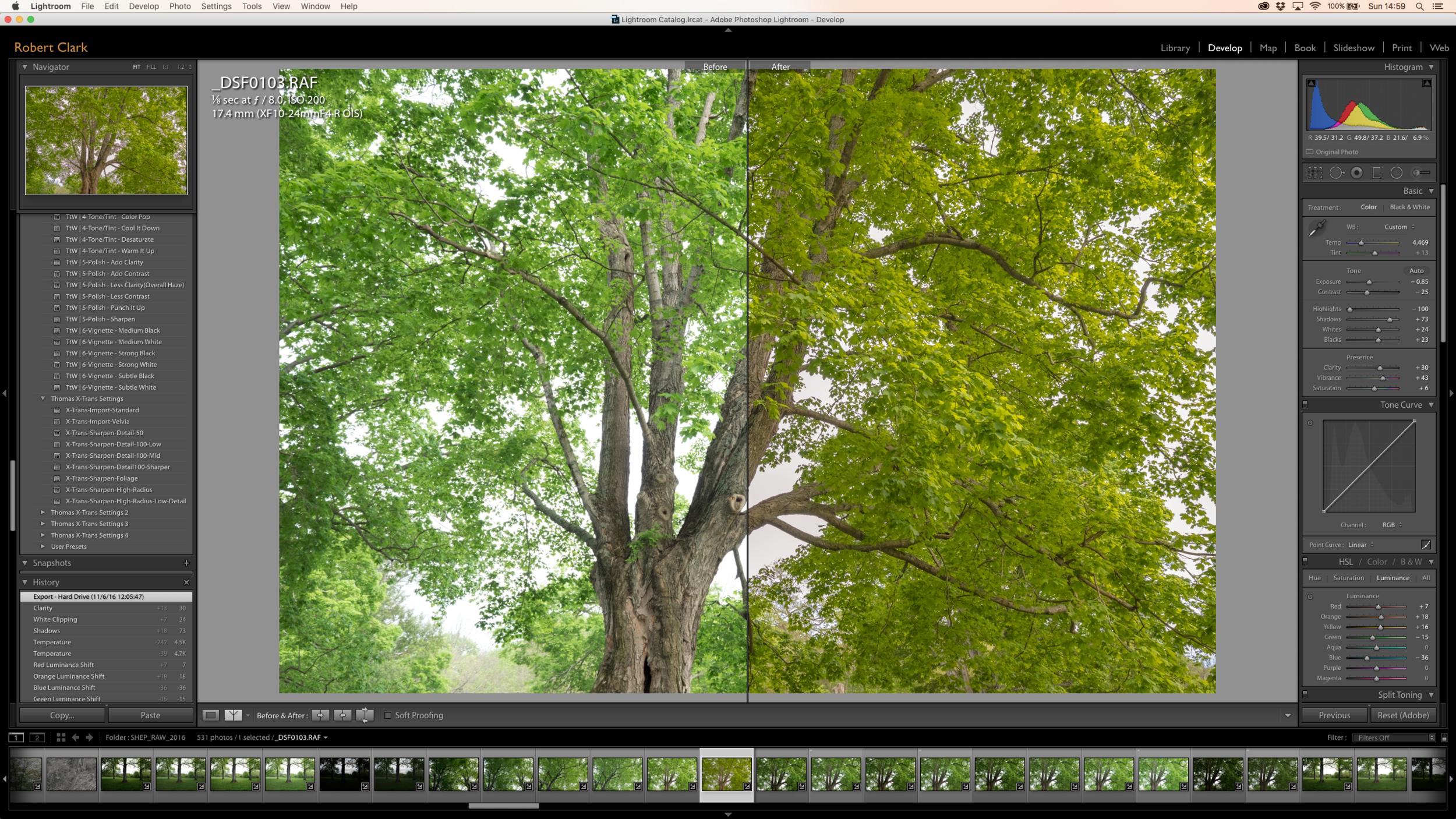 Split Screen: Before and After - Under the Shade of a Maple