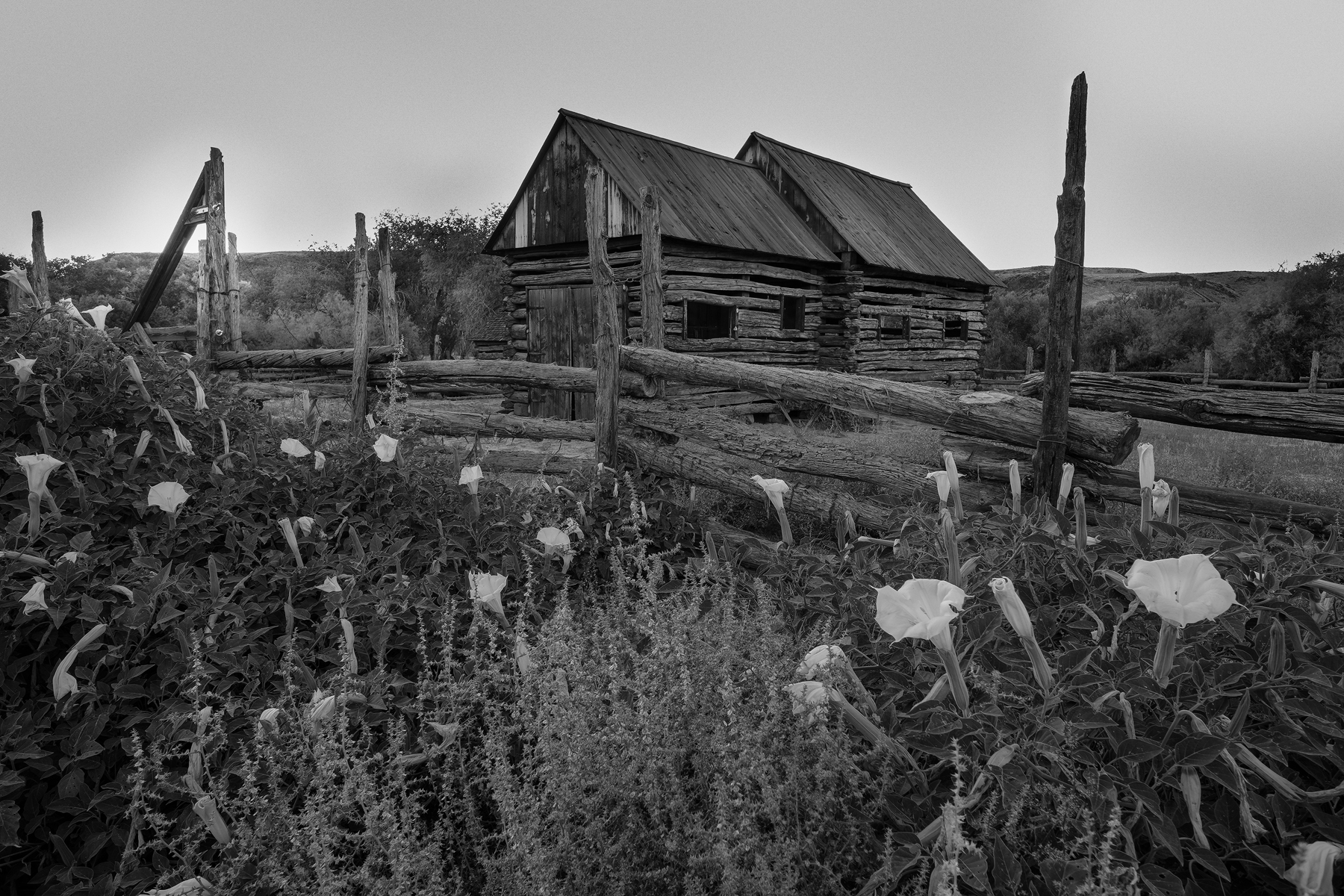 Datura and Cabin • Grafton Ghost Town, Springdale, Utah. Fuji X-T2 and a Fujinon XF10-24mm f4 OIS at 10mm. Image exposed at ISO 200 at f13 for 1/100 of a second.