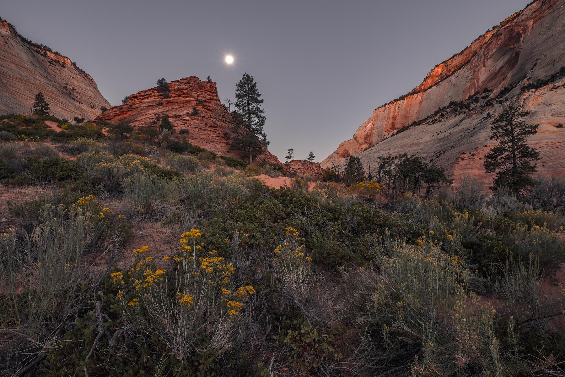 Moon Set over Zion, Zion National Park, UT.