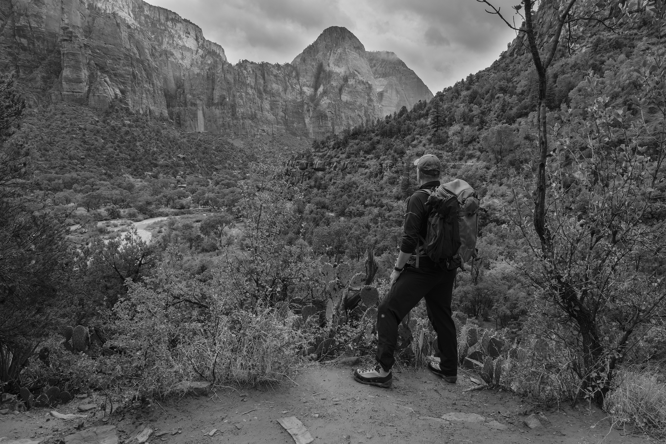 A View into the Valey of Zion Canyon, Zion National Park, UT.