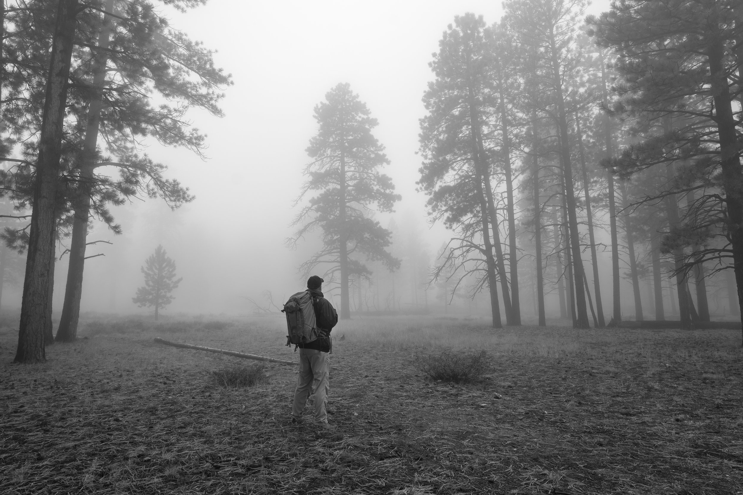 Thick fog envelops the forest above the rim of Bryce Canyon, Bryce Canyon National Park, UT.