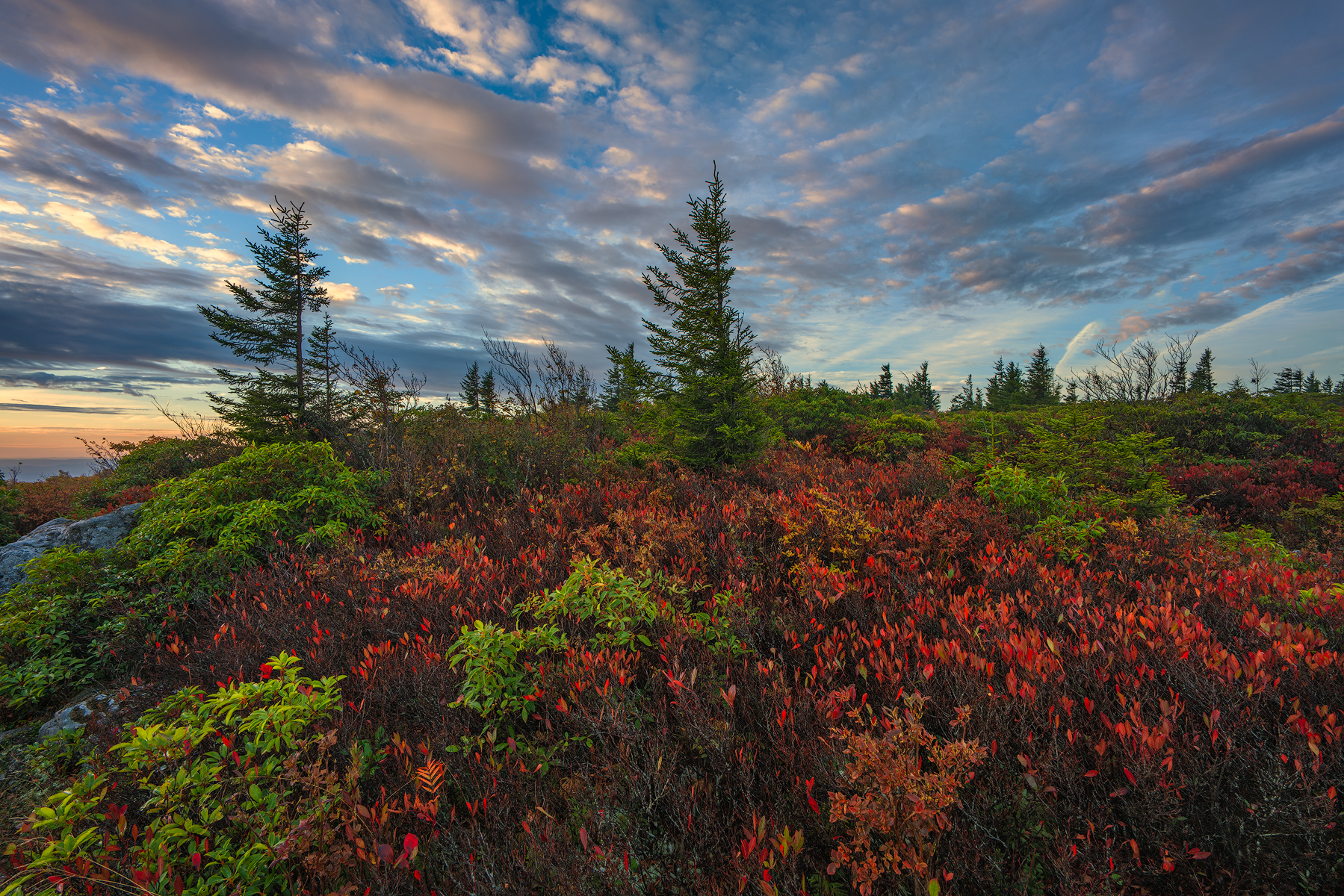 The beauty of sunrise at Dolly Sods Wilderness, West Virginia.