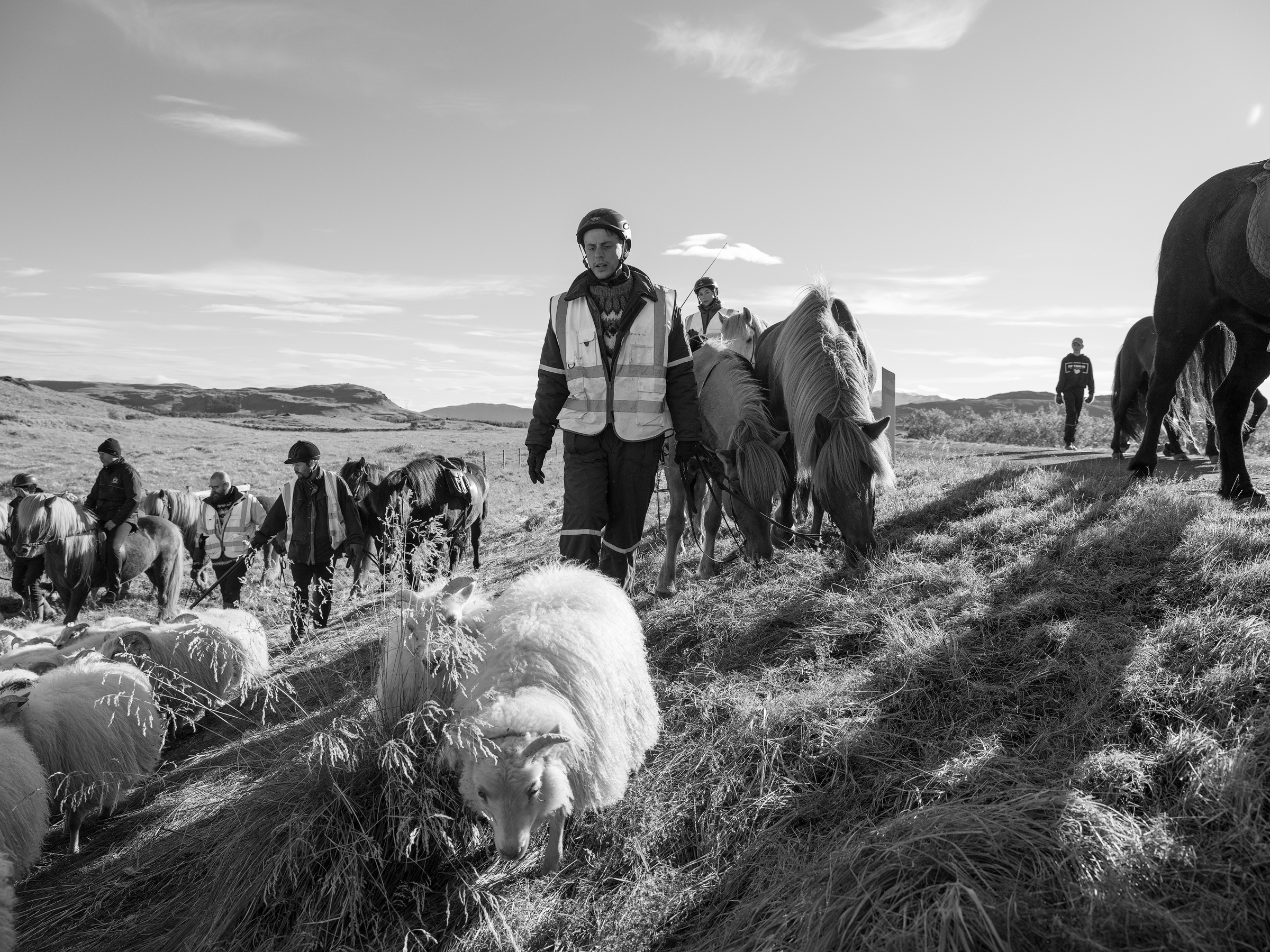 Riders on horseback and foot herd the last of the sheep into the pasture.