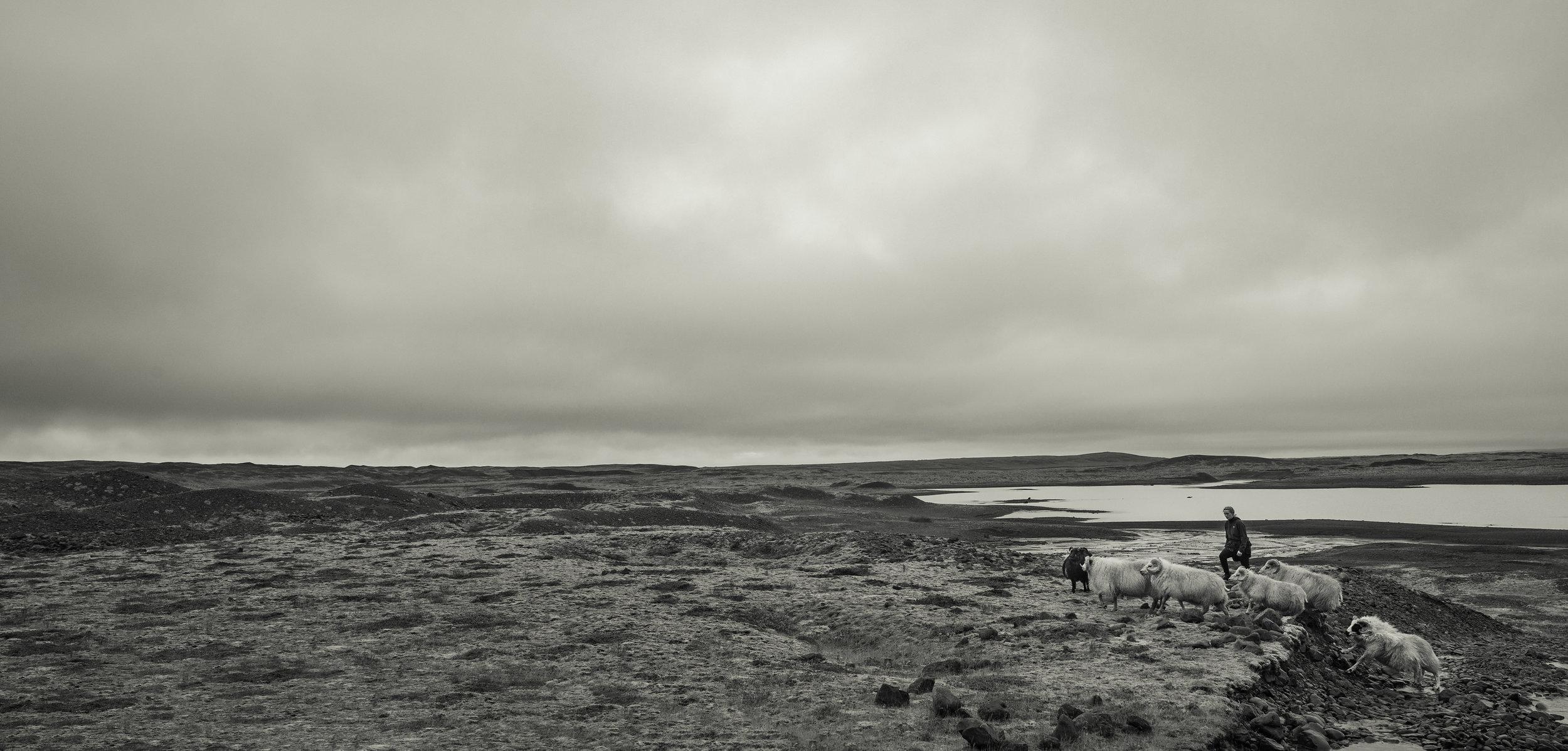 Above, and Below: Gathering sheep in the shadow of Breiðamerkurjökull.