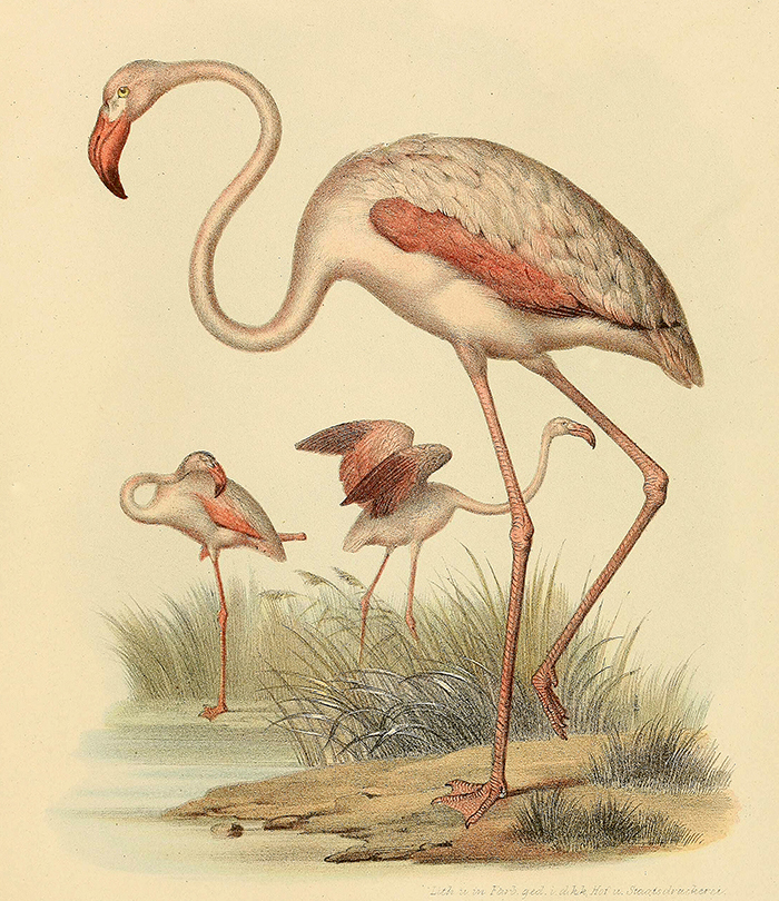 flamingo-wall-print-museum-outlets.jpg