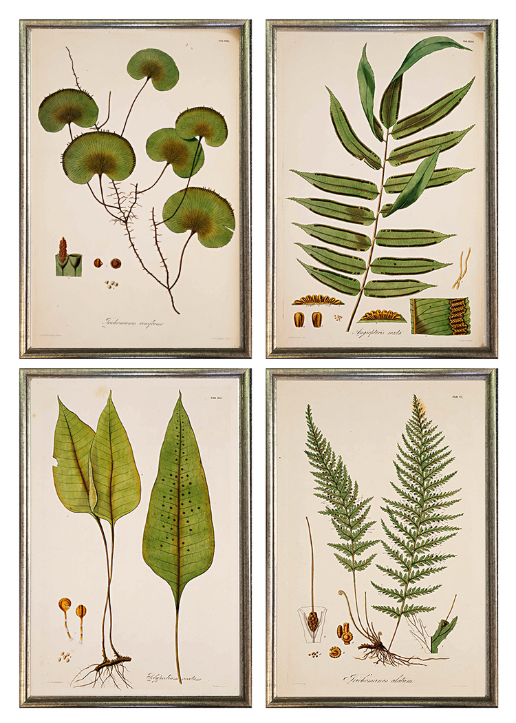 antique-fern-grouping-framed-wall-grouping-museum-outlets.jpg