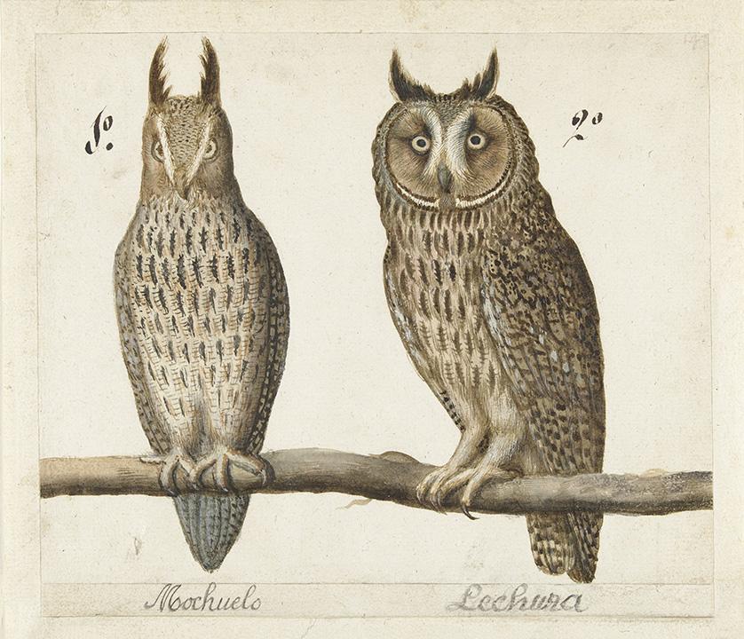 owl-couple-antique-print-museum-outlets.jpg