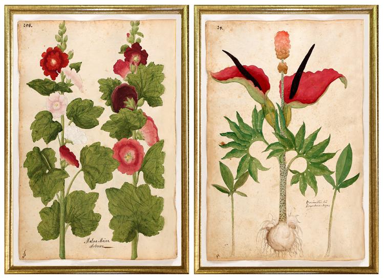 early antique botanical prints