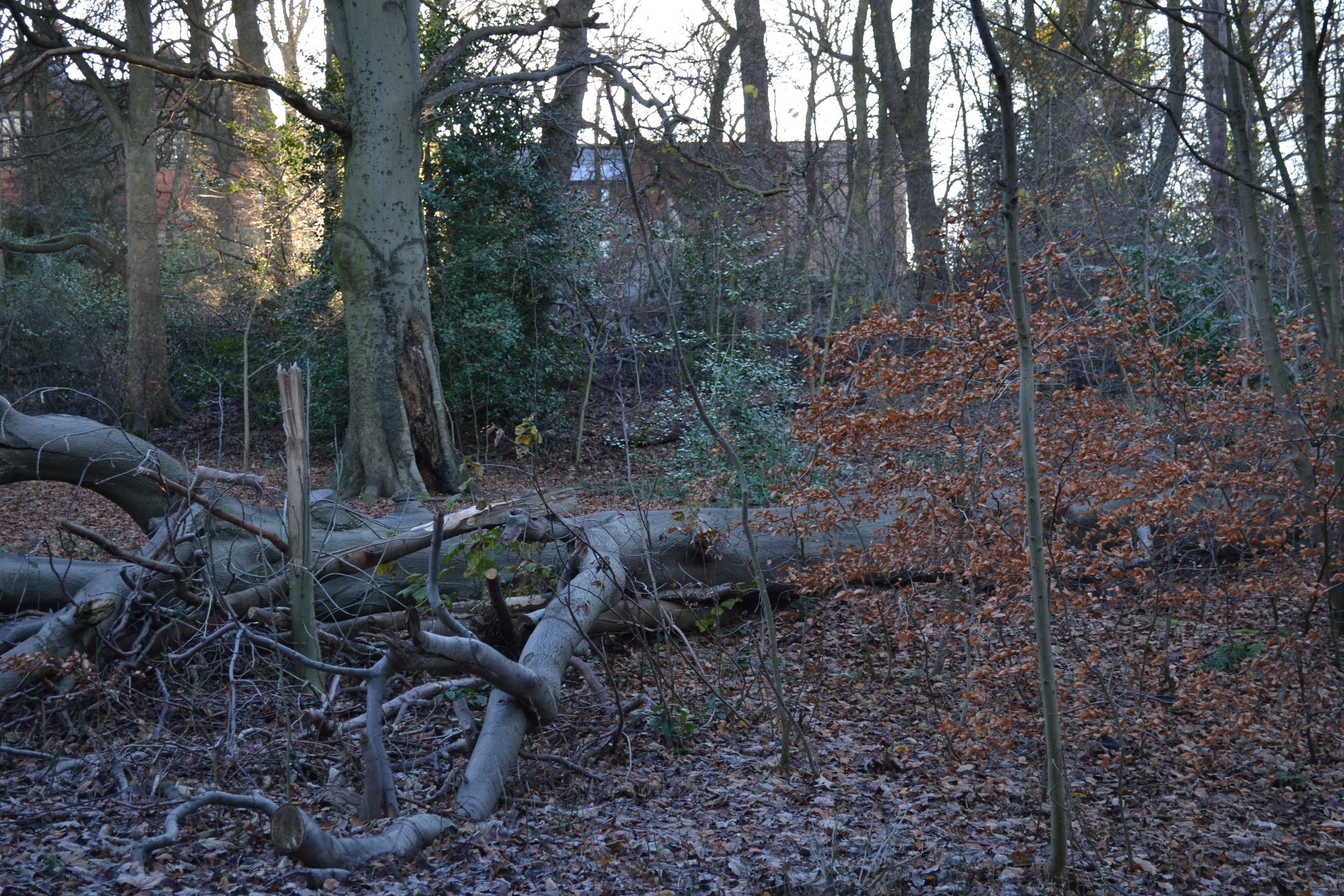 Heaton Park Dec. 13