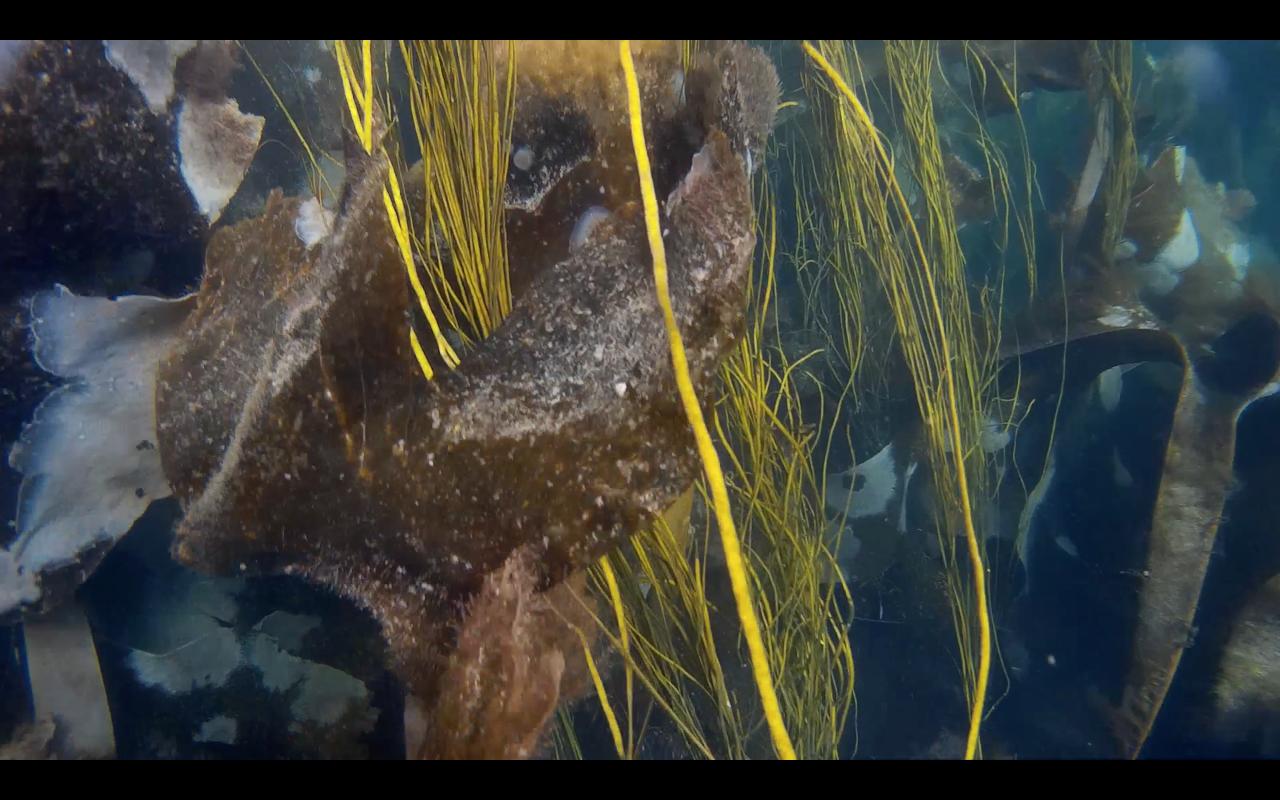Kelp Bed.png