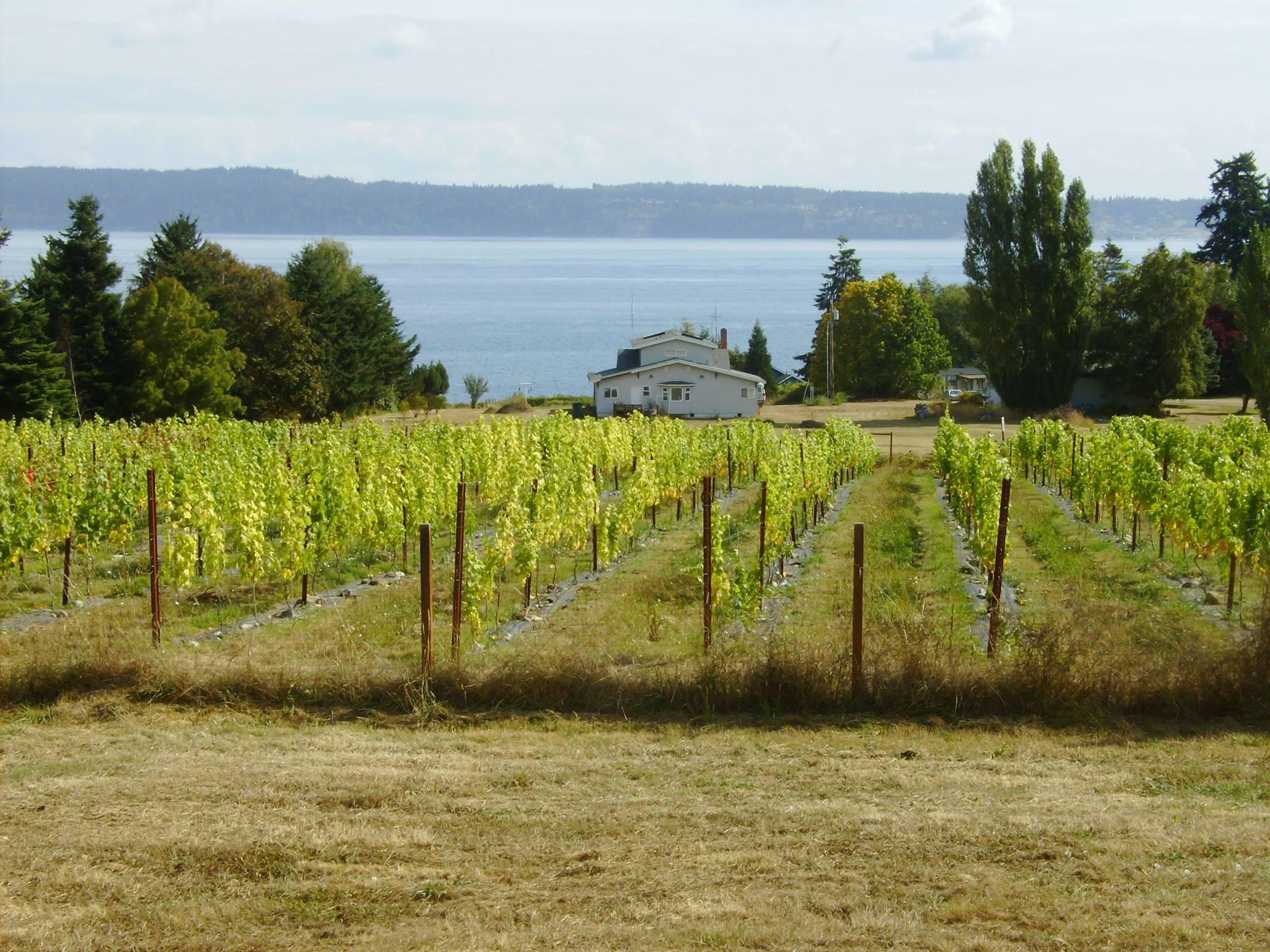 Marrowstone Vineyards, Marrowstone Island, Wine