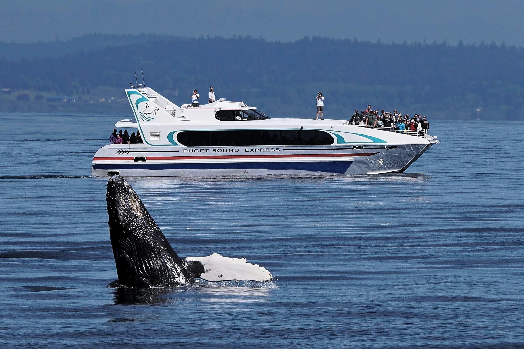 Photo c/o Puget Sound Express
