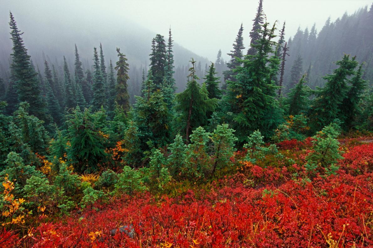 Hurricane Ridge | Photo Credit:  National Geographic