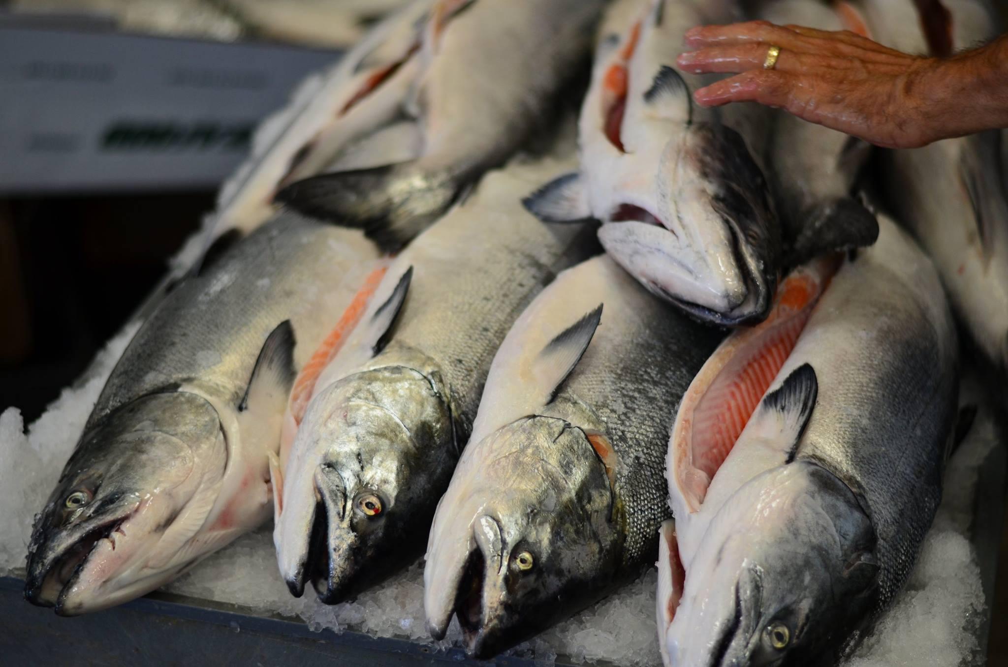 key city fish, port townsend, salmon