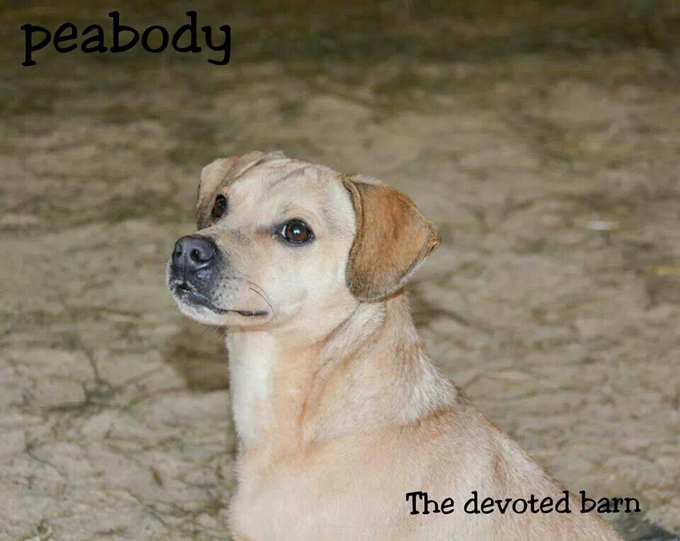 Peabody 3.jpg