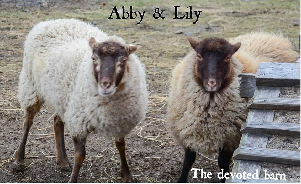 Goats and sheep 5.jpg