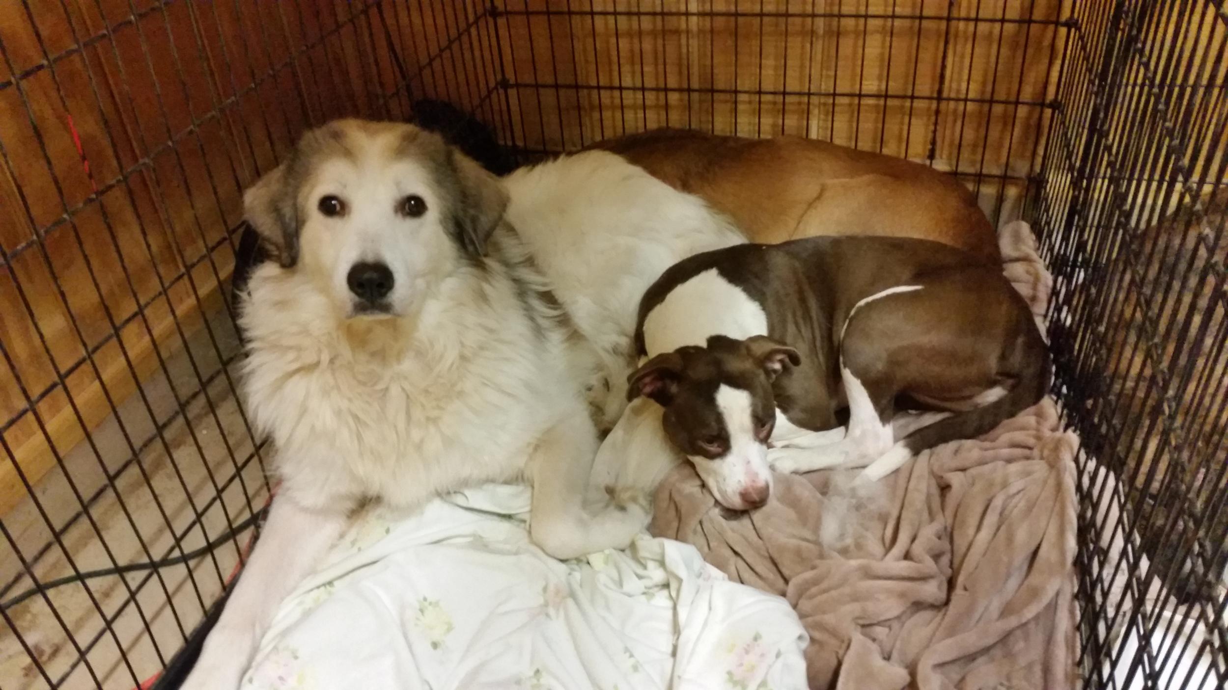 Dusty and Stella.jpg