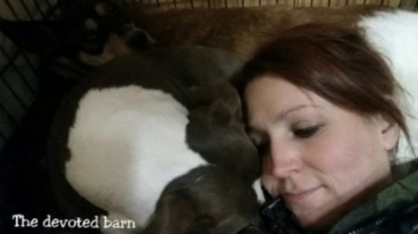 Feral dog stella is sharing some snuggle time with devoted barn founder, mel borden.