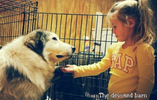 at the devoted barn, dusty is learning that humans aren't so scary after all!