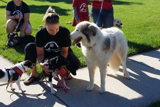 Dusty takes a huge step forward by walking in a parade with The Devoted Barn! Feral dogs take a very long time to become comfortable with the idea of a leash but Dusty did great!