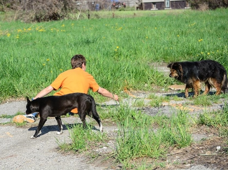"Catching a feral dog requires a lot of time spent building trust.  Feral dogs can't just be ""caught"".  They are too smart.  They can only be caught once they begin to feel comfortable around you."