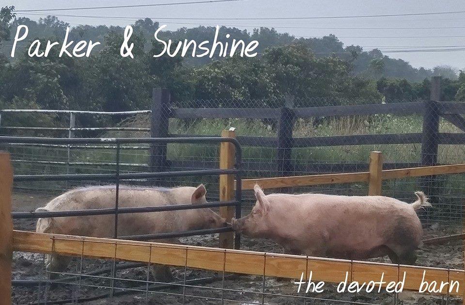 Sunshine and Parker.jpg