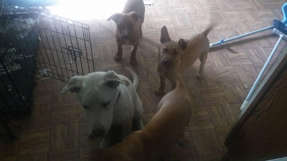 P puppies 6.jpg