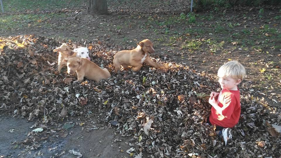 P puppies 7.jpg