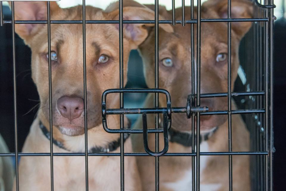 P puppies 11.jpg