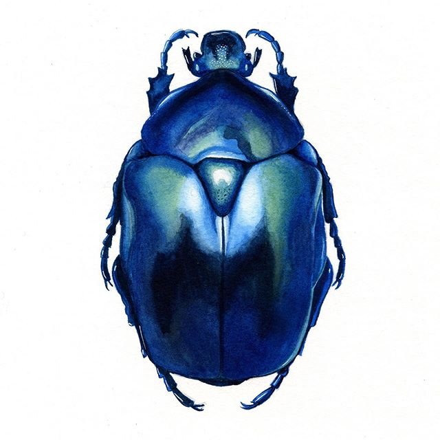 I've been enjoying this study of beetles. What should I try next 🤔 #beetle #watercolour