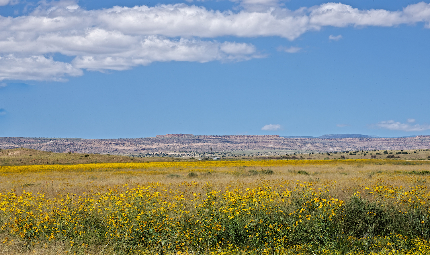 We have never seen so many wildflowers on the mesa.