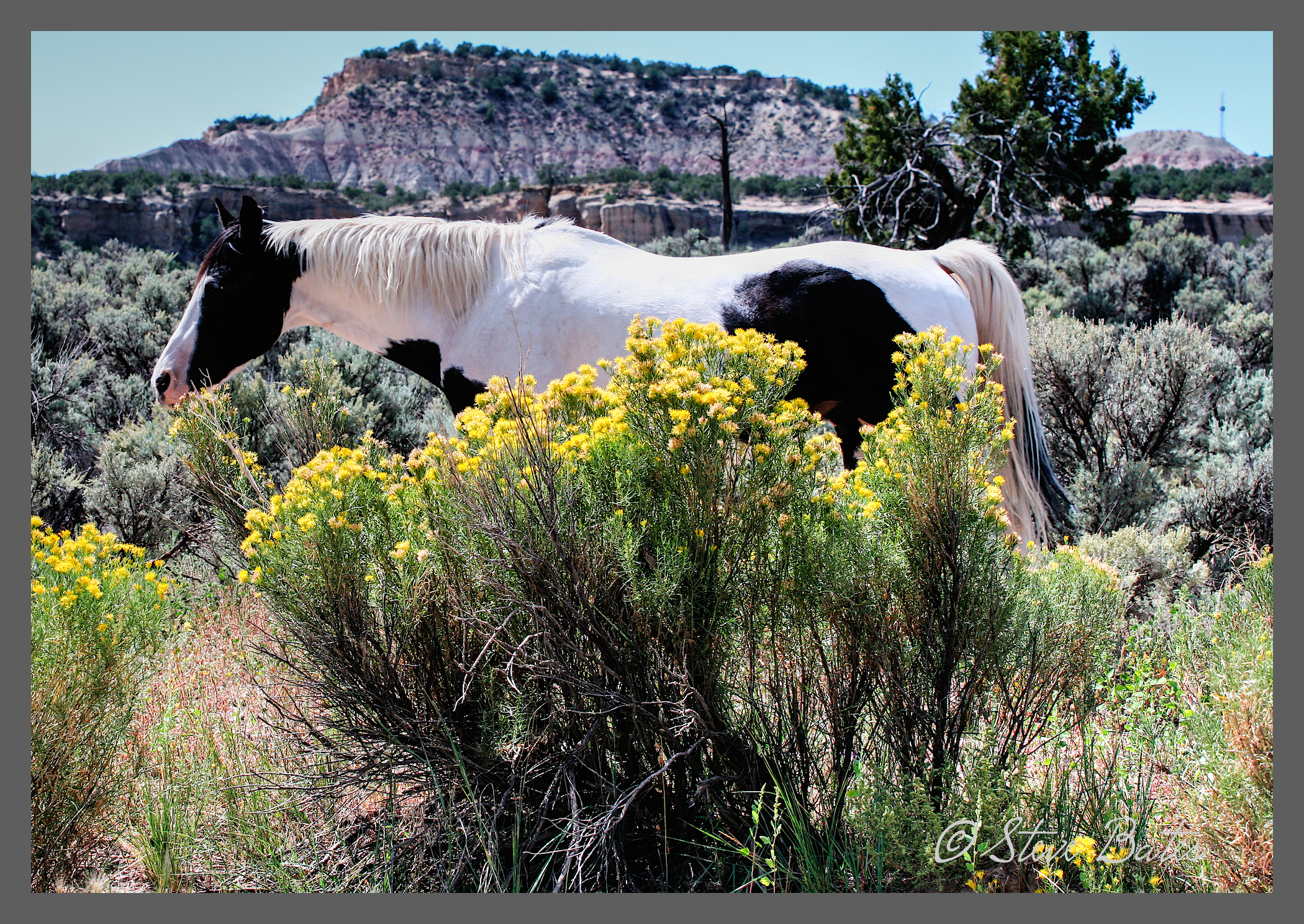 Steve skunked us on the horse. To get yellow flowers as well . . . just lucky!