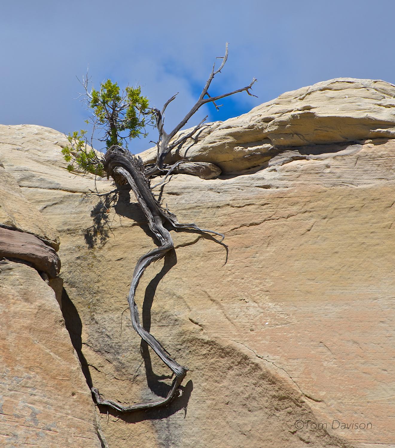 What plants do in the badlands to survive. Amazing.