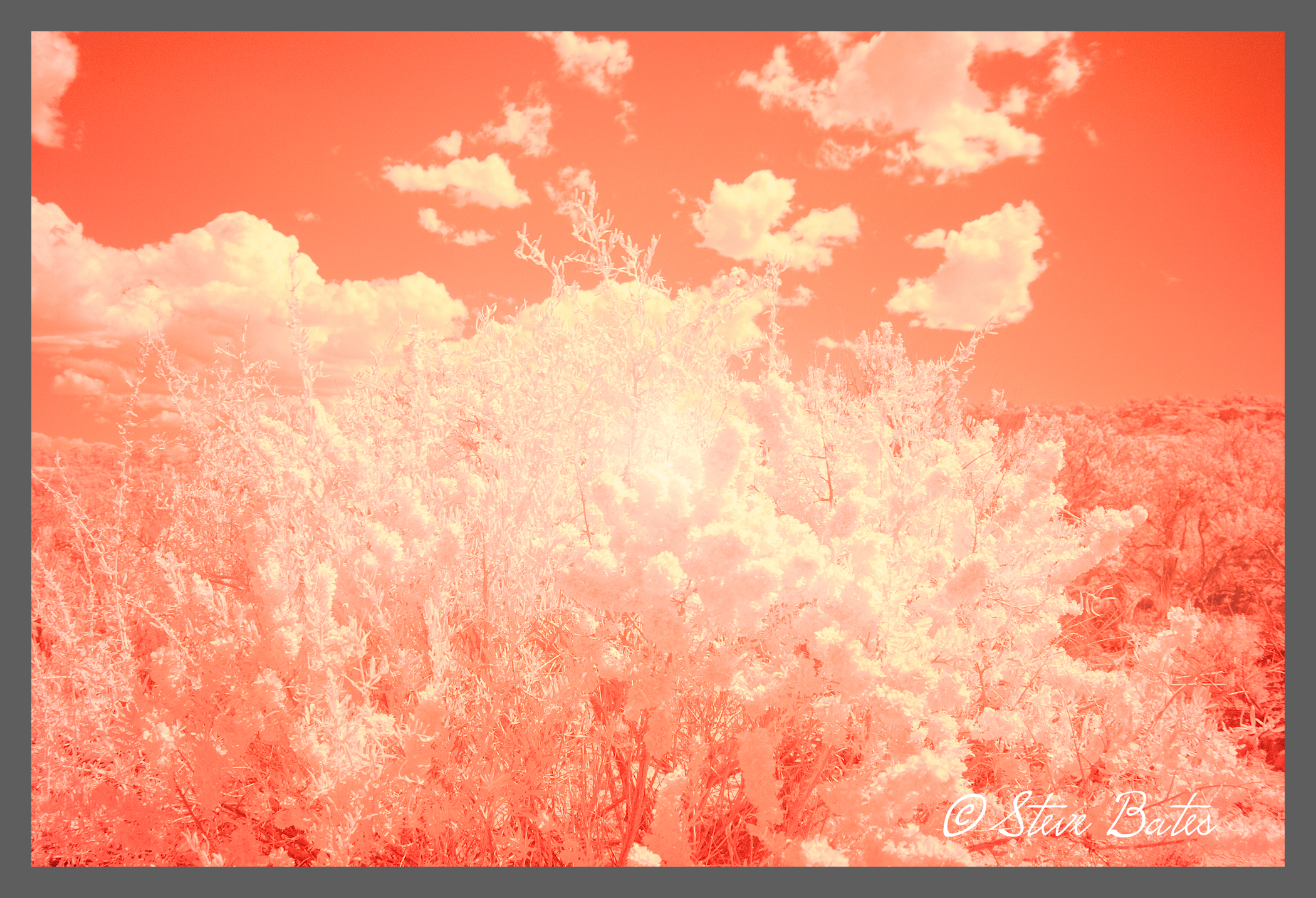 Processed image below. His preview on the camera is this red color. It takes practice to imagine, then, how the image will appear when fully processed.
