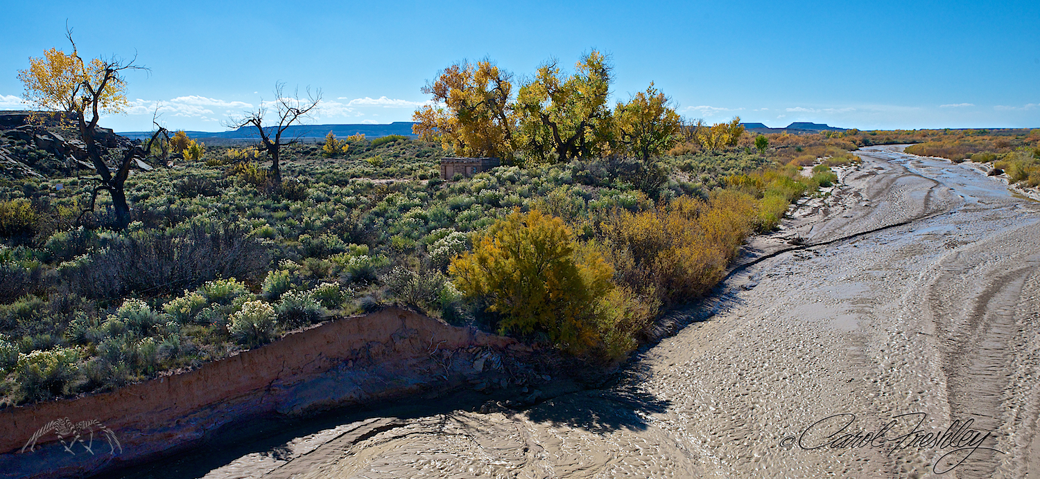 Rio Puerco. The cottonwoods were very vibrant all along the washes, creeks and rivers in the high deserts and Albuquerque.