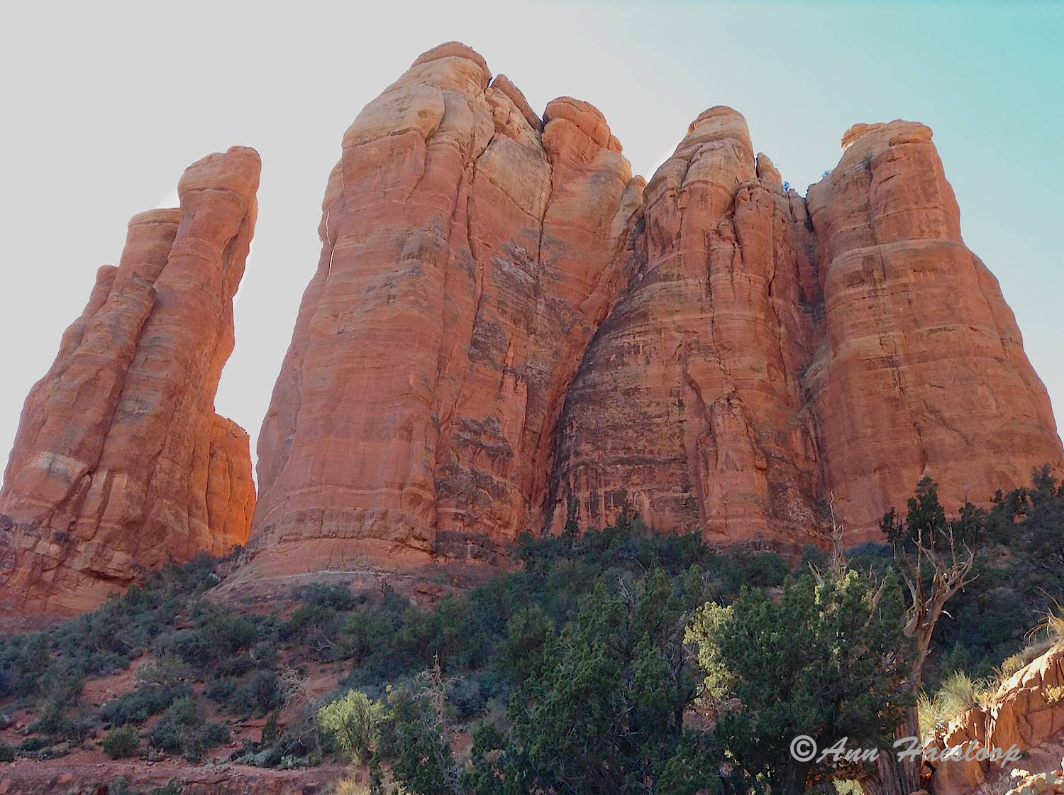 Now that is a very new perspective of Cathedral Rock!  Thanks Ann.
