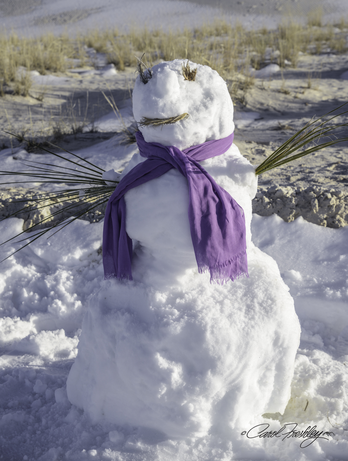 There were snow men being built all over the place. I counted six. But this one was the most impressive. I watched the family build it. After they left I decided it was really a snow woman and put my scarf around her neck.