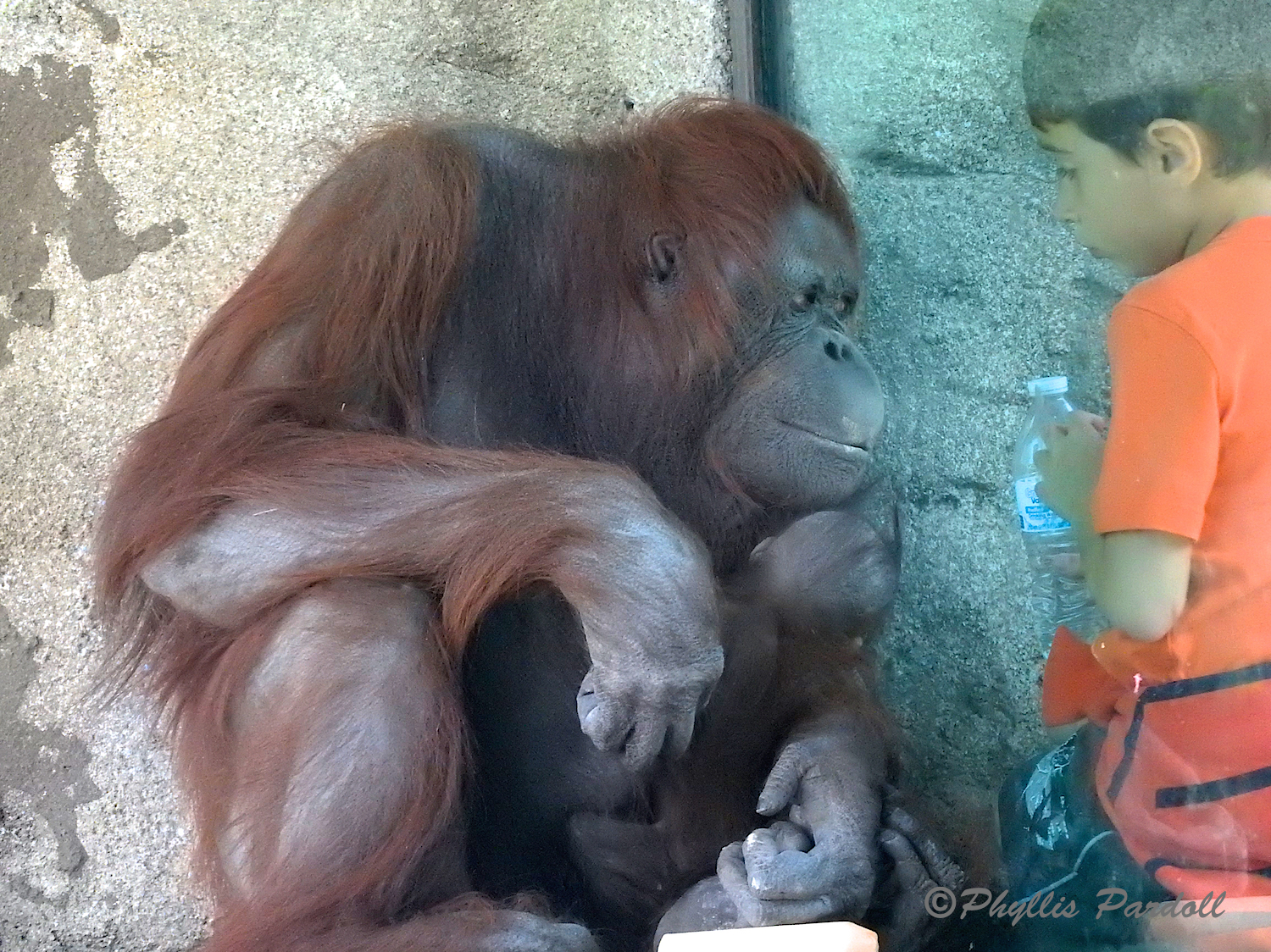 Bess is known for liking to get up close to the glass, especially for children.