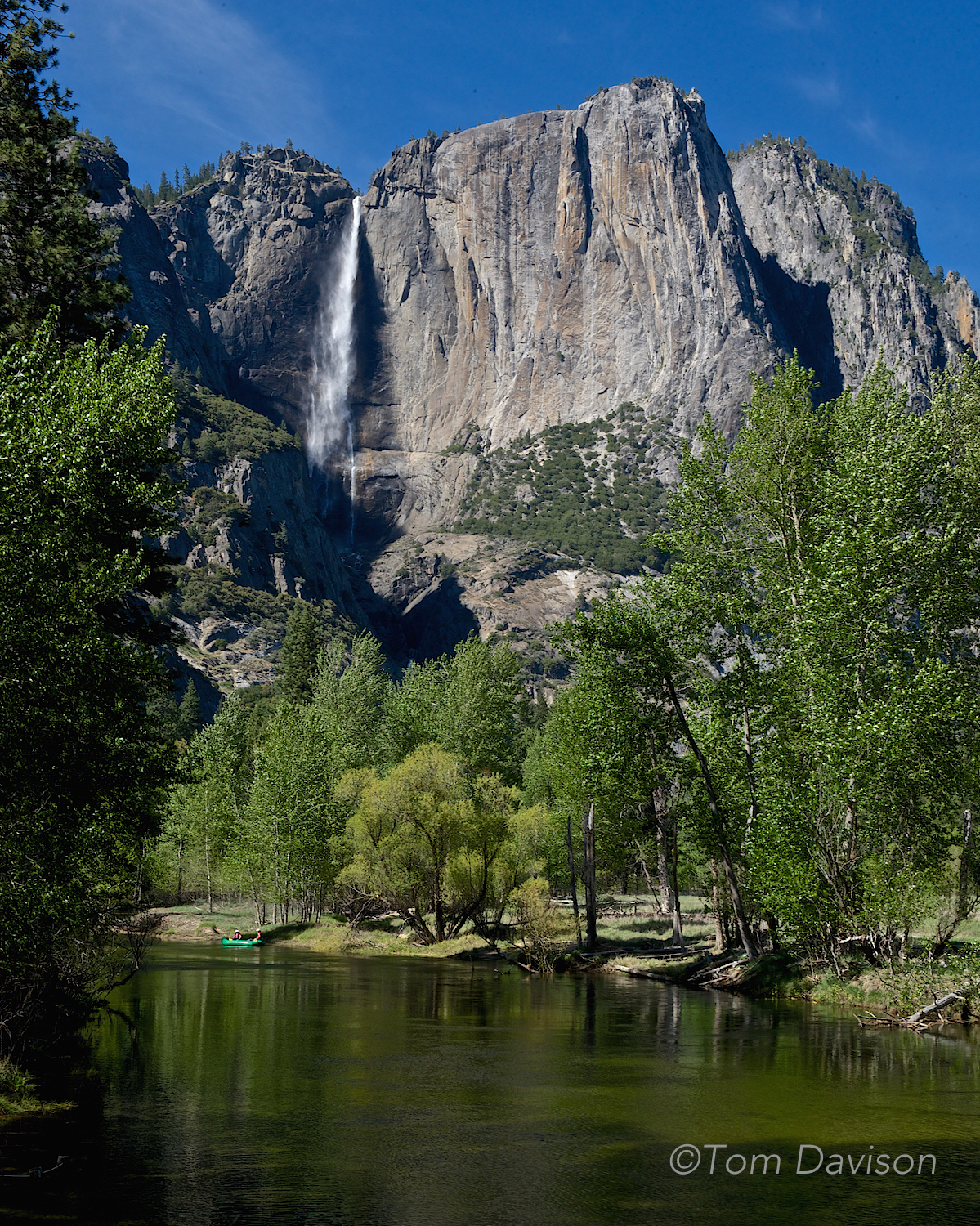 Upper Yosemite Falls from downriver along the Merced.