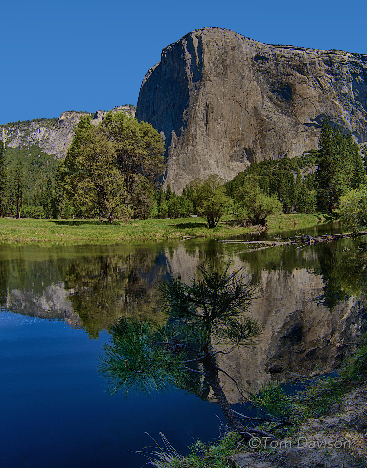 El Capitan from across the Merced River.  Tom looked a long time for just the right foreground in place.  That is another conundrum in photographing Yosemite, to make a shot special the iconic part has to be framed in an interesting way.  A huge granite rock like El Capitan gets old real quick unless we change the window you see it through.