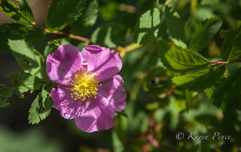 Wonderful wildflowers in the area.