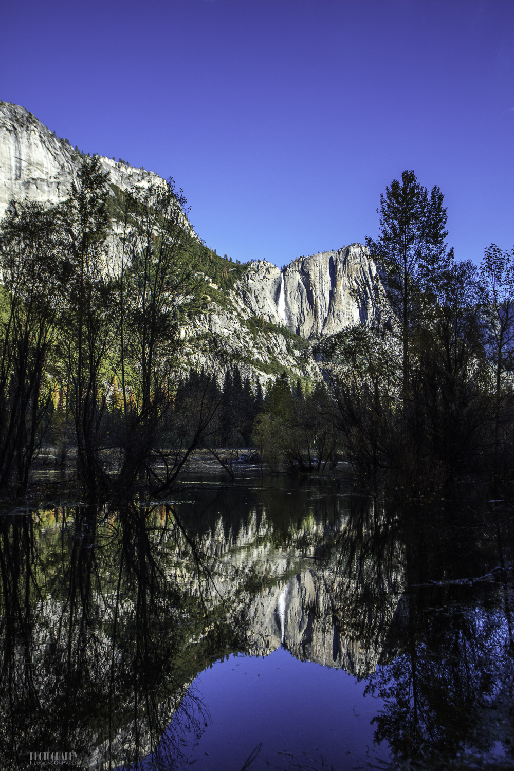 This was one area where we could see that the Merced River had flowed beyond its normal banks.  Normally, we would not see trees out in the river as these were!  That is Yosemite Falls reflected in the river (peaceful along this stretch).