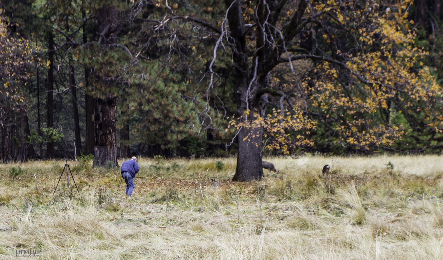 Tom slowly stalking three deer.