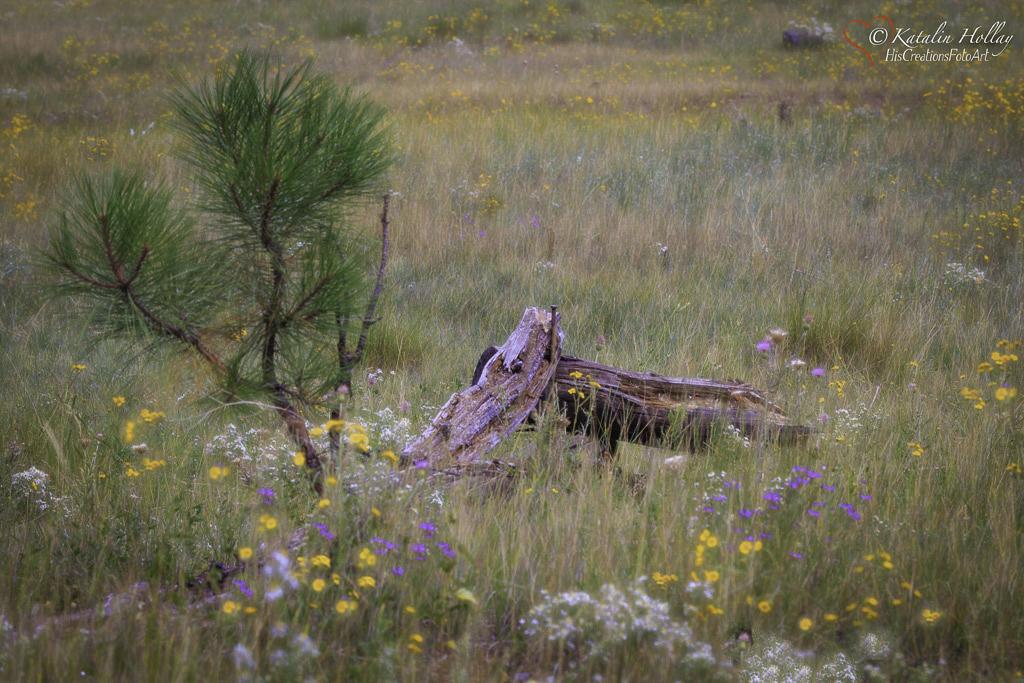 KH Mormon Lake-107.jpg