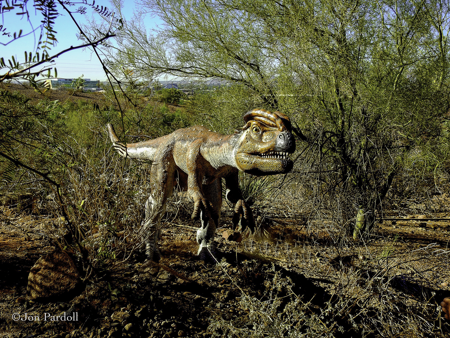Dinosaurs in the Desert-9.jpg