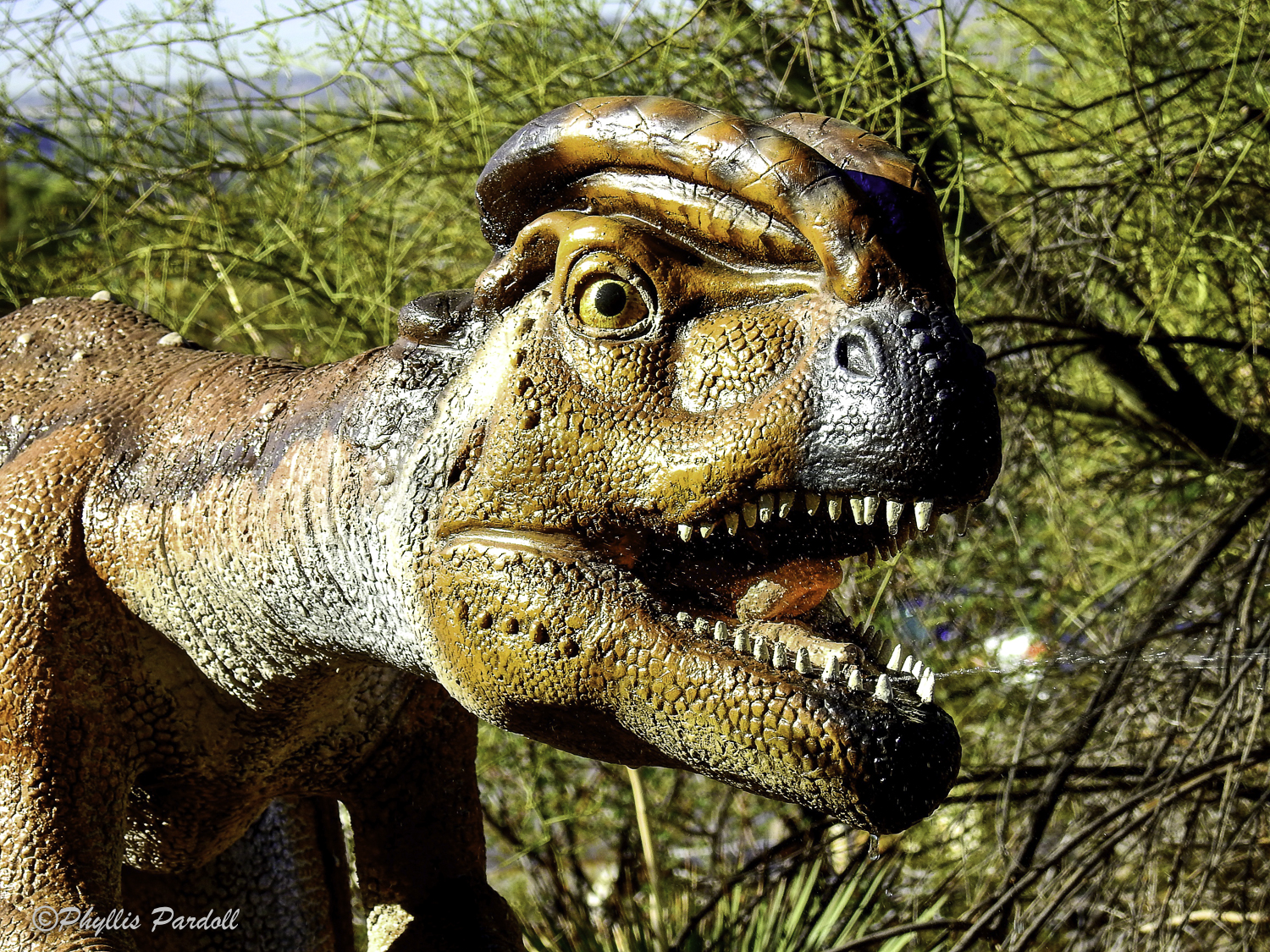 Dinosaurs in the Desert-10.jpg