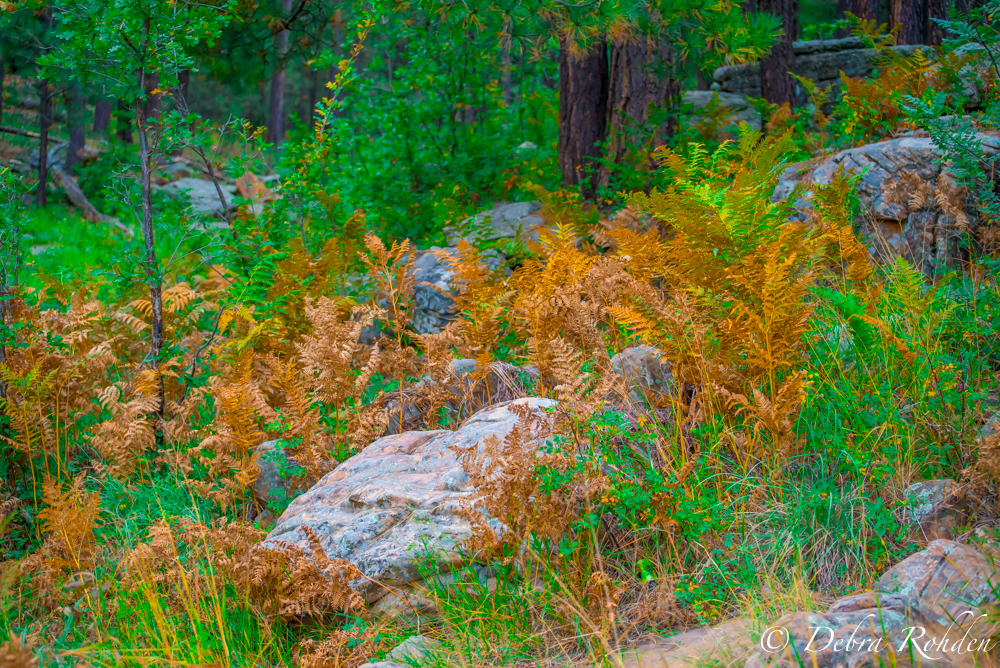 Fern at Wood's Canyon Lake.